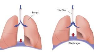 600-465835456-diaphragm-functions
